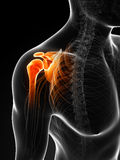Highlighted painful shoulder. 3d rendered illustration of a painful shoulder Royalty Free Stock Photo