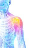 Highlighted shoulder joint Stock Photos