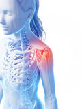 Highlighted shoulder joint Stock Photography