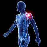 Highlighted shoulder joint Royalty Free Stock Photography