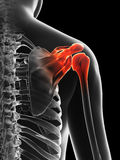 Highlighted shoulder joint Royalty Free Stock Image