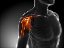 Highlighted shoulder joints Royalty Free Stock Photography