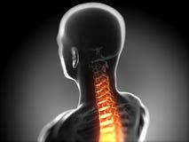 Highlighted spine vector illustration