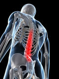 Highlighted spine Royalty Free Stock Photos