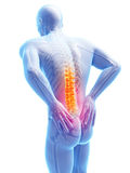 Highlighted spine Stock Photography