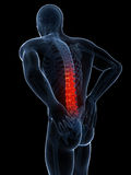 Highlighted spine Royalty Free Stock Photo