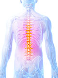 Highlighted spine Royalty Free Stock Image