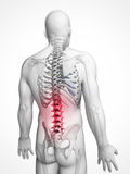 Highlighted spine Royalty Free Stock Photography