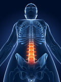 Highlighted spine Stock Images
