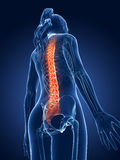 Highlighted spine. 3d rendered medical illustration - painful spine Stock Photography