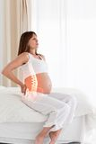 Highlighted spine of pregnant woman Royalty Free Stock Images