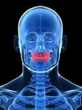 Highlighted teeth Royalty Free Stock Images