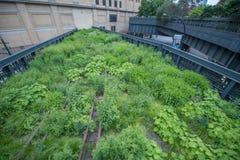 Highline em New York Fotos de Stock Royalty Free