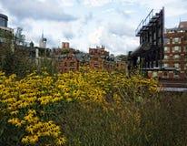 Highline parkerar sikten, NYC Arkivfoton