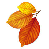Highly detailed autumn leaves Royalty Free Stock Photo