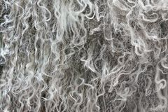 Highly detailed background texture of gray fur made of synthetic animal long wavy and curly hair royalty free stock photos