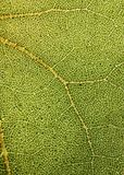 Highly Detailed Close Up Photo Of A Plant Foliage Royalty Free Stock Photos