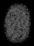 Highly Detailed Fingerprint Stock Images
