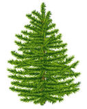 Highly detailed fir tree. Royalty Free Stock Images
