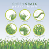 Highly detailed  green grass vector pattern  brush Stock Photos