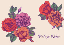 Highly detailed hand-drawn roses. Vector isolated elements Royalty Free Stock Images