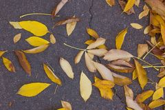 Highly detailed image of autumn leaves very shallow focus stock photo