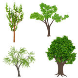Highly detailed realistic cartoon trees set. Wood forest icons elements. Royalty Free Stock Image