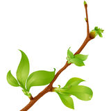 Highly detailed spring branch Stock Photos