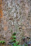 Highly detailed tree bark texture. Royalty Free Stock Photos