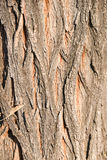 Highly detailed tree bark texture, background Stock Images