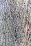 Highly detailed tree bark texture. Close up of old tree bark texture in the forest, highly detailed Stock Photos