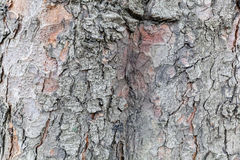Highly detailed tree bark texture. Close up of old tree bark texture in the forest, highly detailed Stock Image