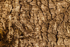 Highly detailed tree bark texture. Close up of old tree bark texture in the forest, highly detailed Royalty Free Stock Photos