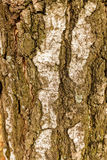 Highly detailed tree bark texture. Close up of old tree bark texture in the forest, highly detailed Stock Images