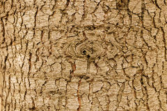 Highly detailed tree bark texture. Close up of old tree bark texture in the forest, highly detailed Royalty Free Stock Photography