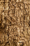 Highly detailed tree bark texture. Close up of old tree bark texture in the forest, highly detailed Royalty Free Stock Images