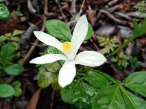 Highly focused flower. HD flower with waterdrops focused Stock Image