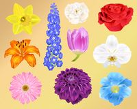 Photo-Realistic Flowers - Ten Vector Illustrations - For print, web, apps, media royalty free illustration