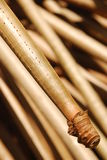 Highly Slanted Screwpine Tree Root. With Fibre on Tip Stock Image