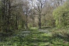 Highnam Woods RSPB Reserve Stock Photo