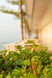 Highrise garden abstract Royalty Free Stock Images