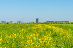 Highrise on the horizon of a flowering field Royalty Free Stock Photos