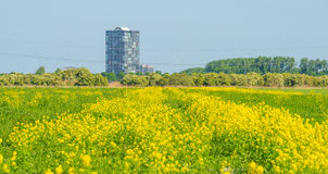 Highrise on the horizon of a flowering field Stock Image