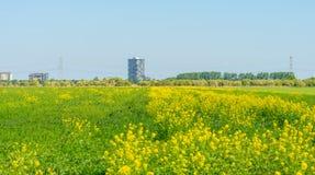 Highrise på horisonten av ett blomningfält Arkivbilder