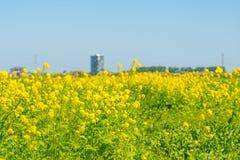 Highrise på horisonten av ett blomningfält Arkivbild