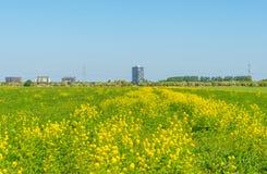 Highrise på horisonten av ett blomningfält Royaltyfria Foton