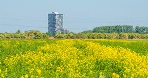 Highrise på horisonten av ett blomningfält Fotografering för Bildbyråer