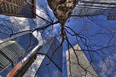 Highrisers und Baum lizenzfreies stockfoto