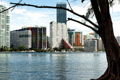 Highrises at Brickell Royalty Free Stock Photography