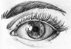 Hight resolution. Black and white drawing of eye and eyebrow. Stock Photo